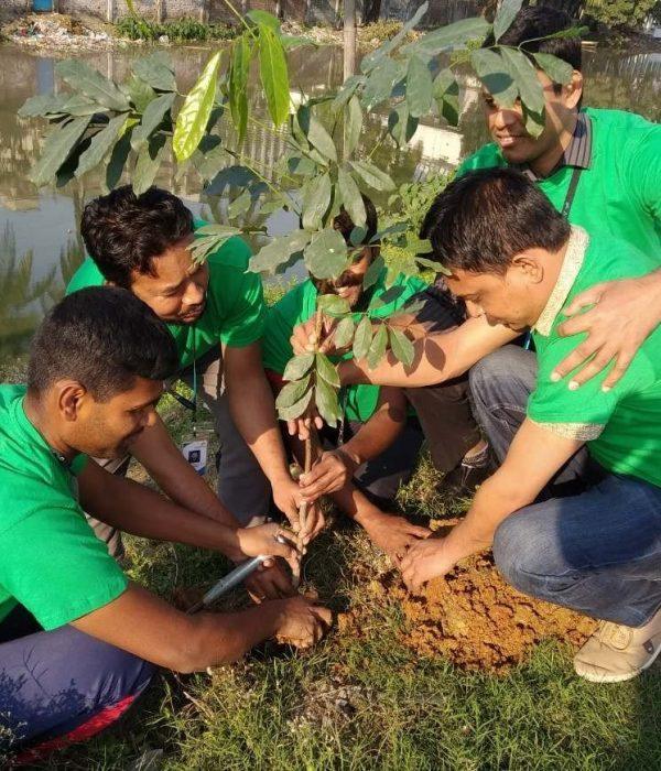 Tree+Plantation-+DNV